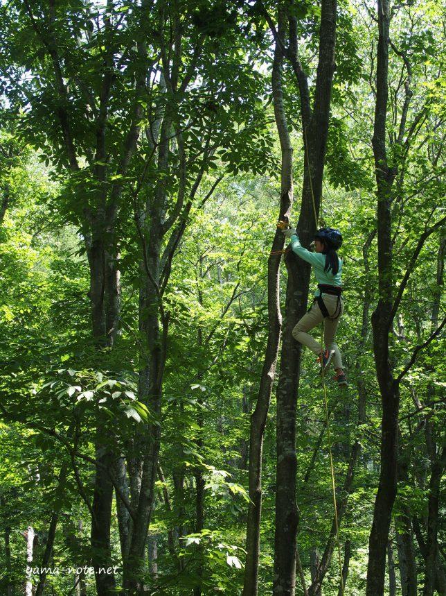 木登りんぐ1