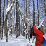 まったり雪の森探検