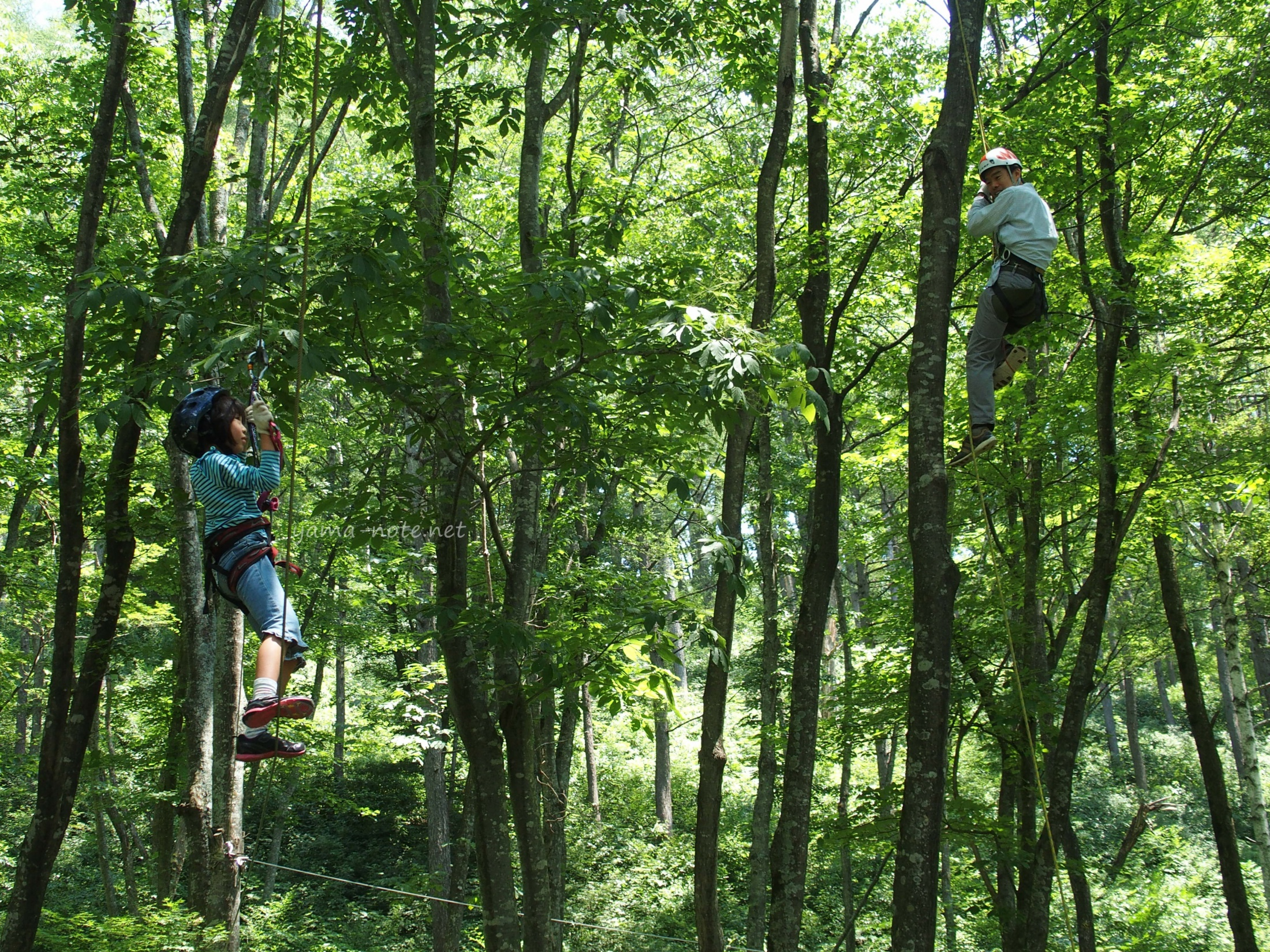 森の中で木登りする親子