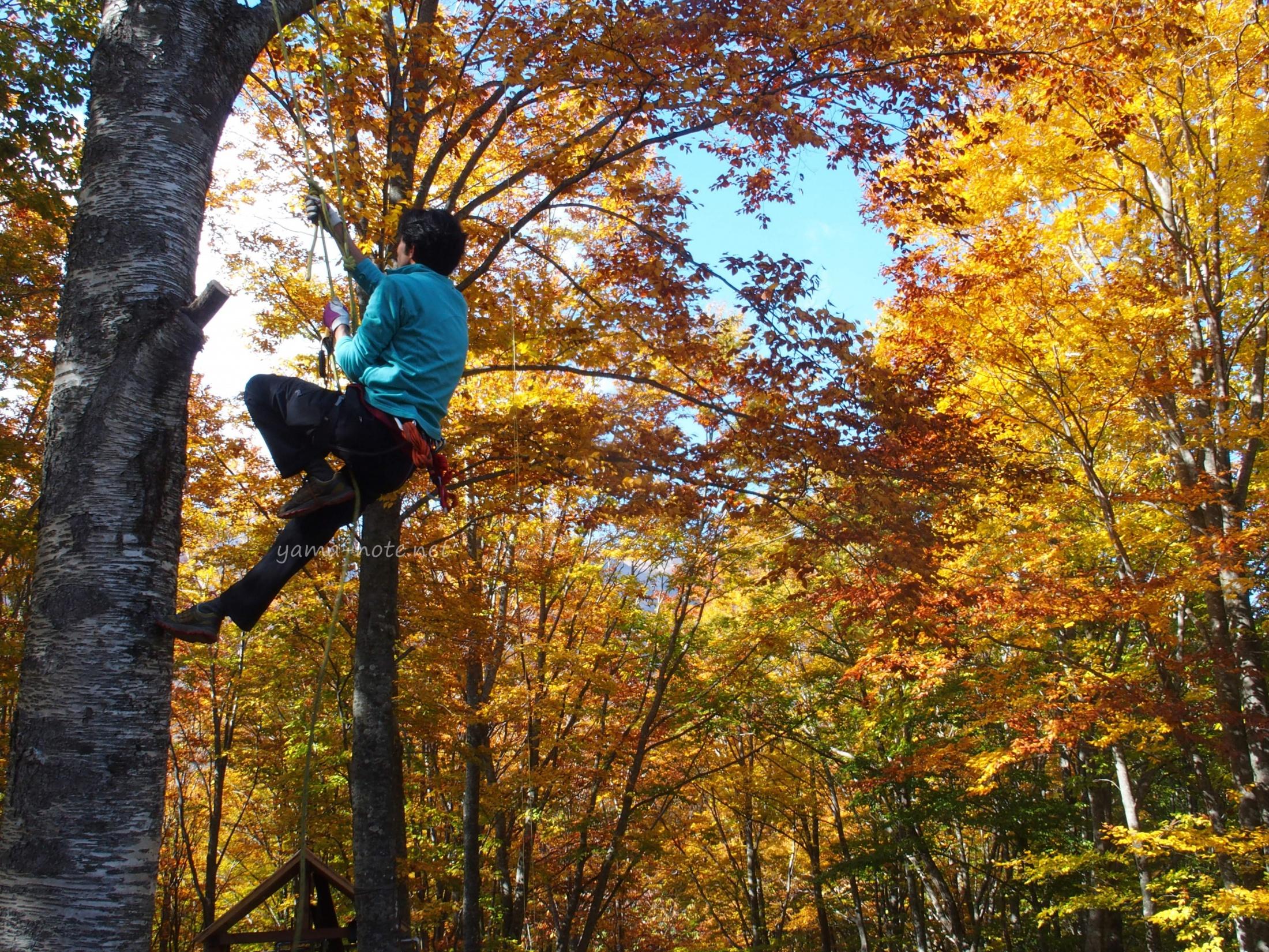 紅葉の森で木登りする男性