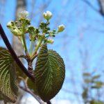 里山、春のはじまり