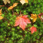 秋の深まり、ぐるり八ヶ岳。