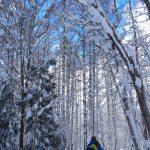 2018-2019シーズン・スノーシューハイキングのお知らせ