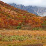 北アルプス八方池紅葉